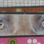 Živalska policija (110)