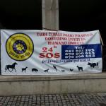Živalska policija (42)